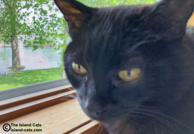 Close up of Ernie by window, his ears are cut off in photo