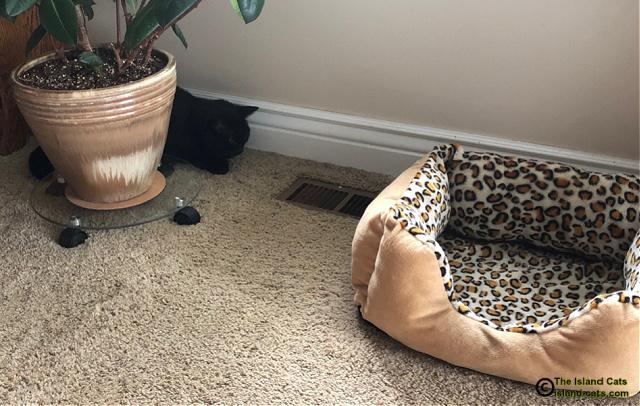 Ernie on floor squeezed behind plant