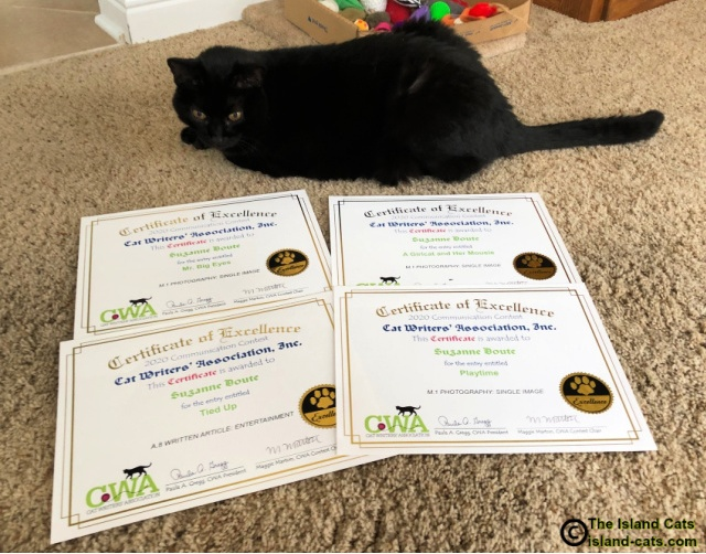Ernie sitting with Certificates of Excellence