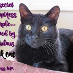 Are You Loved by a Fabulous Black Cat?