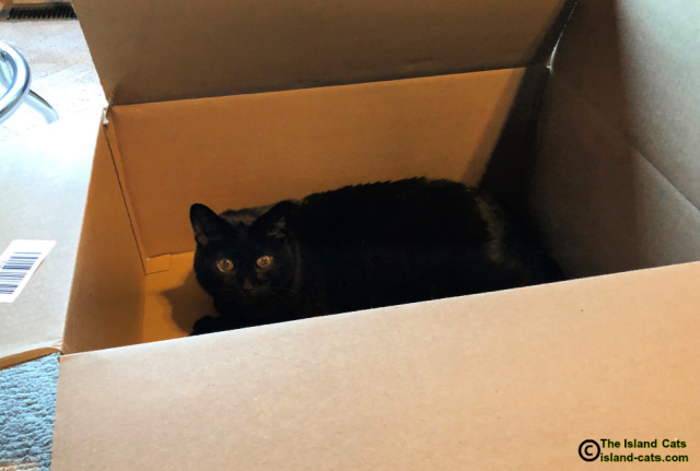 Ernie lying in a big cardboard box