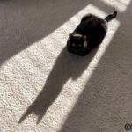 A Sunpuddle Invader