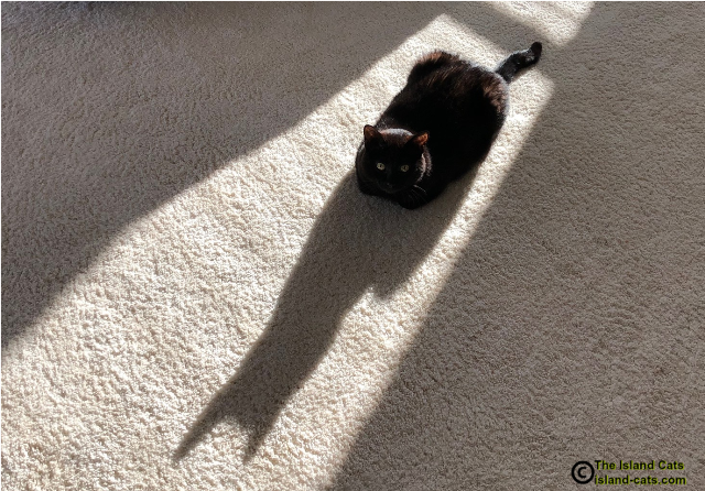 Ernie sitting in a sunpuddle with his shadow