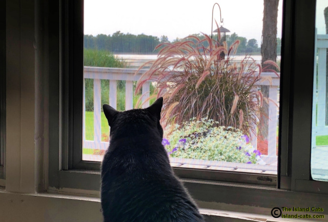Ernie looking out window in the sunroom