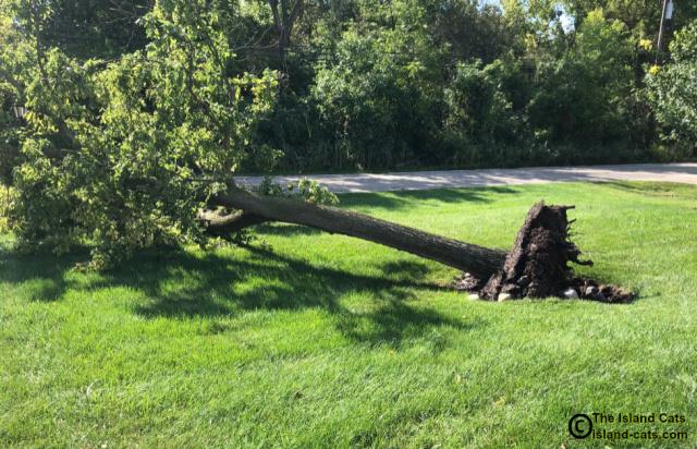 Big tree laying on the ground