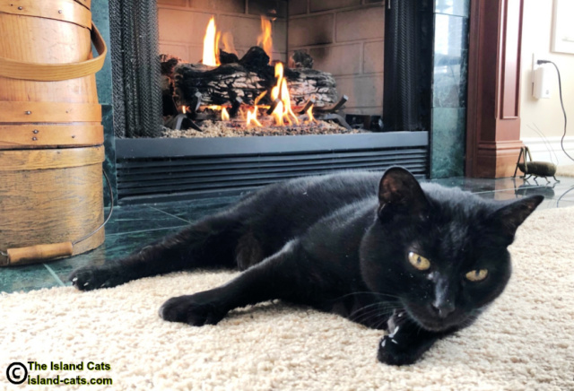 Ernie lying by the fireplace